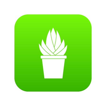 Aloe vera plant icon digital green for any design isolated on white vector illustration