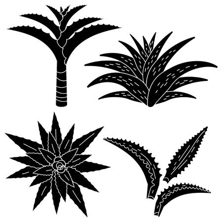 Aloe vera icon set. Simple set of aloe vera vector icons for web design on white background  イラスト・ベクター素材