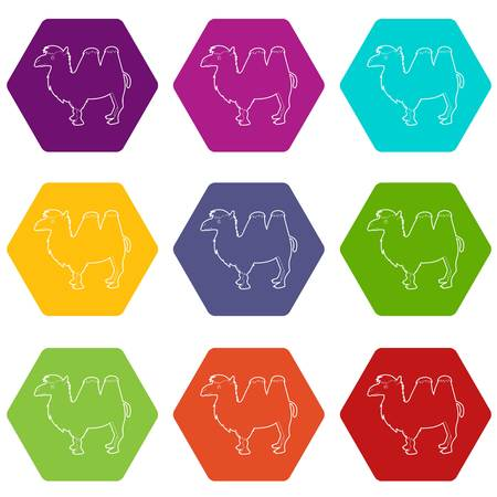 Camel icons set 9 vector Illustration