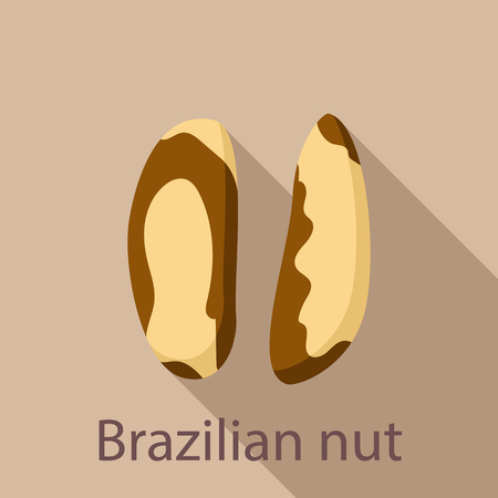 Brazilian nut icon. Flat illustration of brazilian nut vector icon for web design