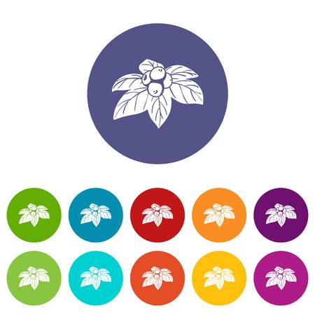 Whortleberries icons set vector color Illustration