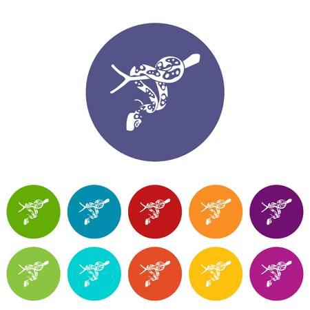 Ball python icons set vector color