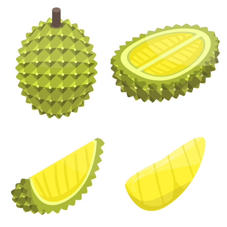 Durian icons set. Isometric set of durian vector icons for web design isolated on white background Illustration