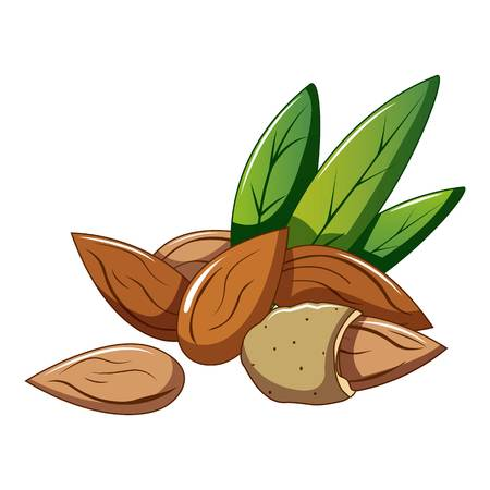 Eco almond icon. Cartoon of eco almond vector icon for web design isolated on white background Ilustrace