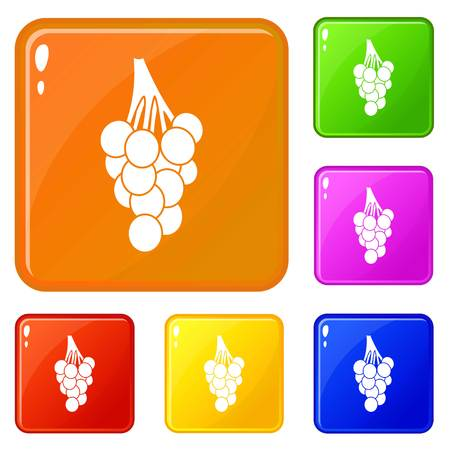 Grapes icons set vector color