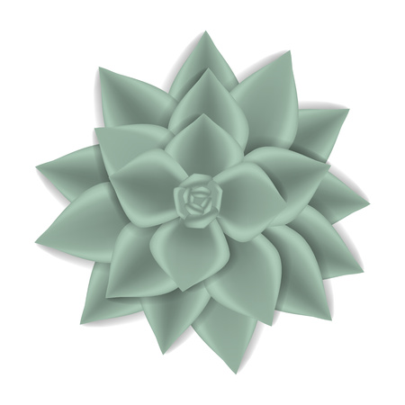 Home succulent icon. Realistic illustration of home succulent vector icon for web design isolated on white background