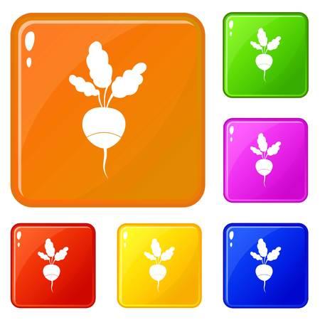 Fresh radish icons set vector color
