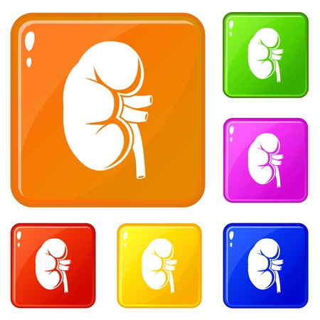 Kidney icons set vector color Ilustrace