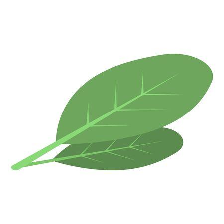Cocoa leaf icon, isometric style