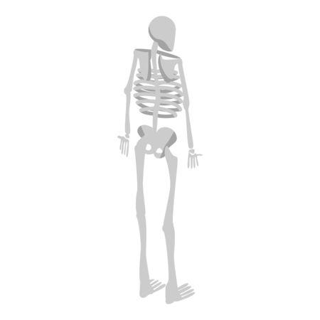 Back of human skeleton icon. Isometric of back of human skeleton vector icon for web design isolated on white background