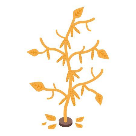 Dry soybean plant icon, isometric style