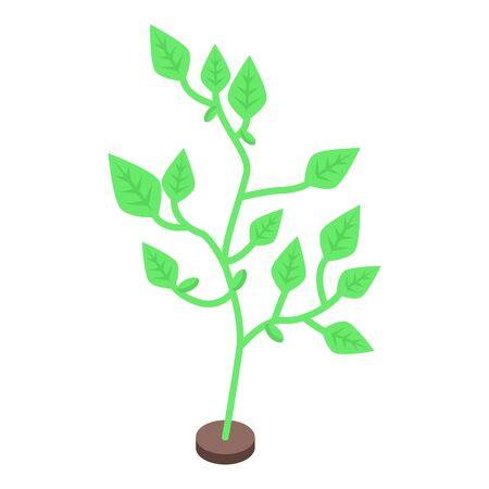 Farm soybean plant icon, isometric style Stock Illustratie