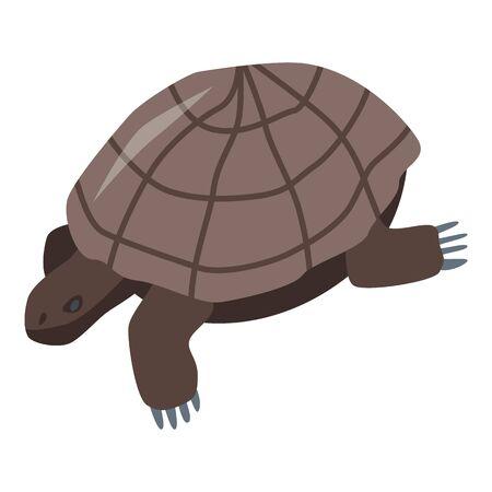 Brown turtle icon, isometric style Illustration