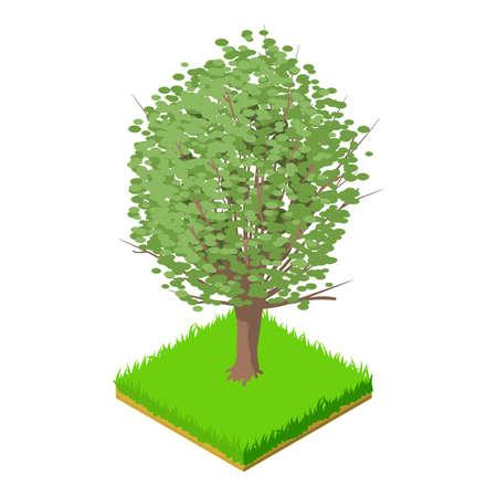 American elm icon, isometric style Vettoriali