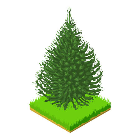 Balsam fir icon, isometric style