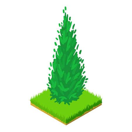 Arborvitae icon, isometric style