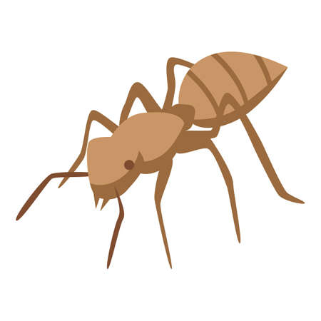 Tropical ant icon, isometric style