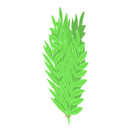 Rosemary branch icon, isometric style 向量圖像