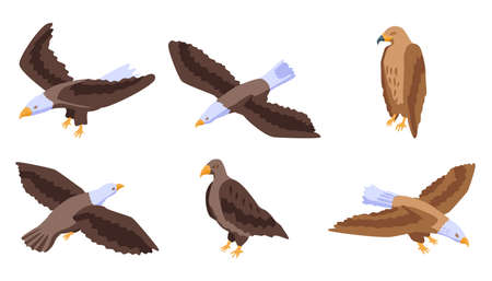 Eagle icons set, isometric style Archivio Fotografico