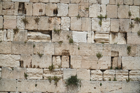Close up view of the Western Wall with plants in Jerusalem, Israel