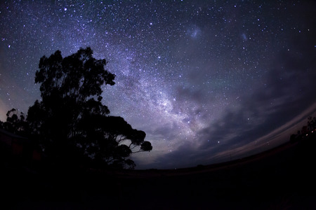star field: Mllky way in the southern hemisphere and the silhouette of a tree Stock Photo