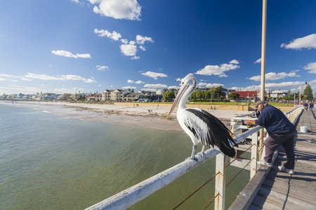 Pelican: Adelaide, Australia - May 12, 2014: People fishing at Henley beach jetty, Adelaide, South Australia. Henley Beach is a popular beachside suburb of Adelaide, which is well known for its laidback lifestyle.