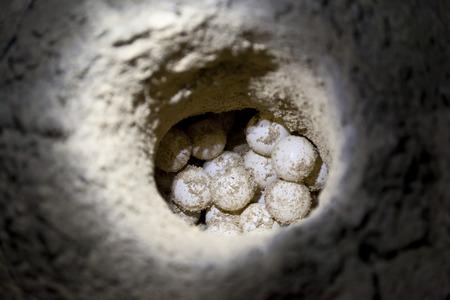 huevo blanco: Huevos de tortugas marinas verdes en agujero de arena en una playa en el sitio de criadero
