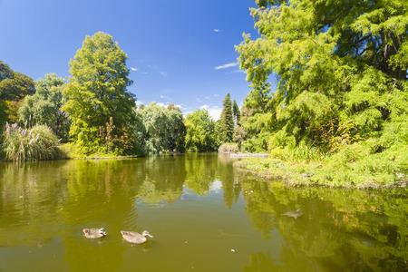 botanic: Pond in the Botanic Gardens of South Australia