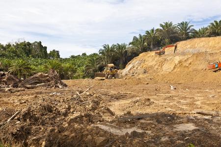 deforestacion: La deforestación de un bosque tropical en Malasia