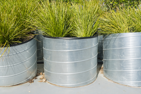 tin: Plants in large tin pots in a garden Stock Photo