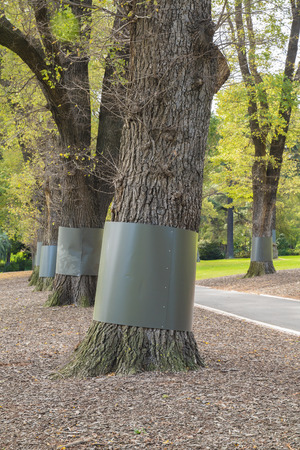 tree canopy: Guards around trunks to restrict access of small animals to tree canopy