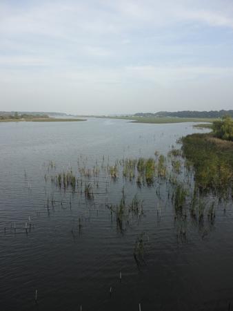 waterweed: landscape of Teganuma Lake
