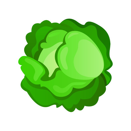 Cabbage Stock Vector - 8957836