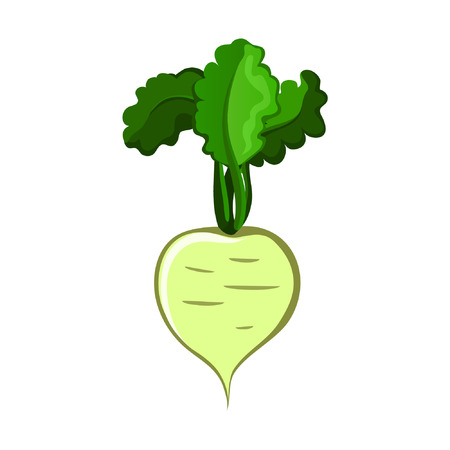 radish: Turnip Illustration