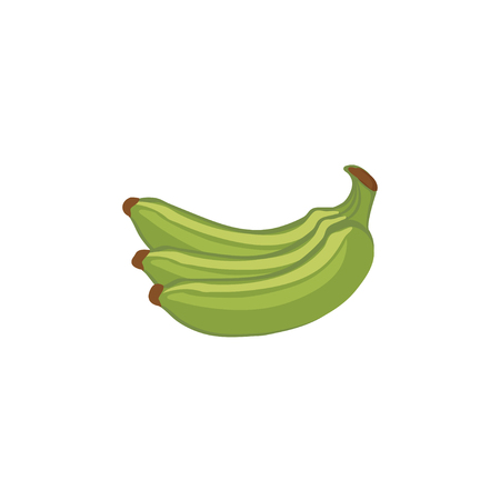 skin color: Vector Fruits - Green bananas Illustration