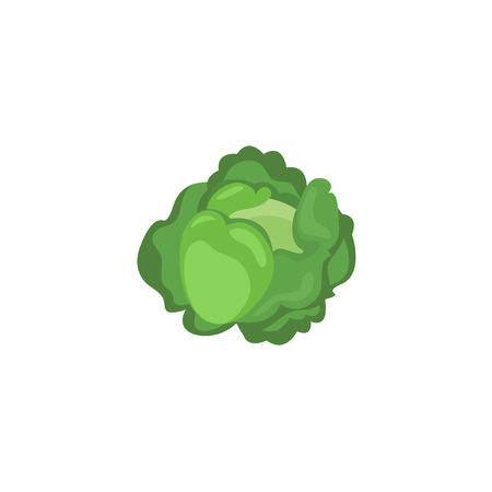 Vector Vegetables - Cabbage