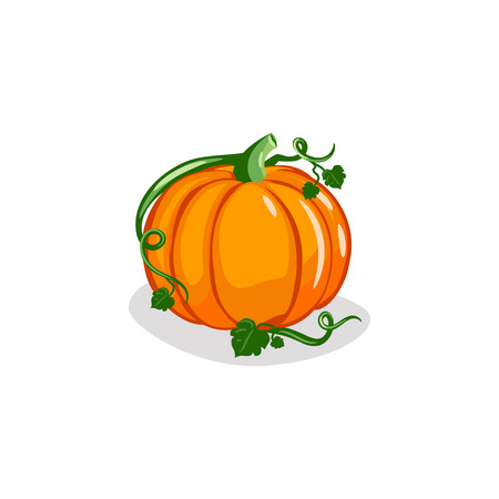 Cute Pumpkin Vector