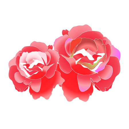 two: Two rose flower background
