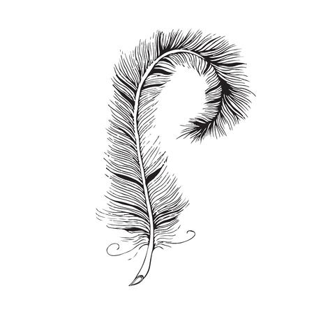 line drawing: Vector feather line drawing Vettoriali