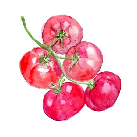 cherry tomatoes: Watercolor tomatoes. Cherry tomatoes