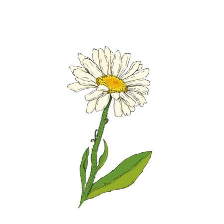 Daisy bloem vector illustratie Stock Illustratie