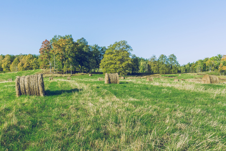 Sunny morning in Latvian  meadow. Stock Photo
