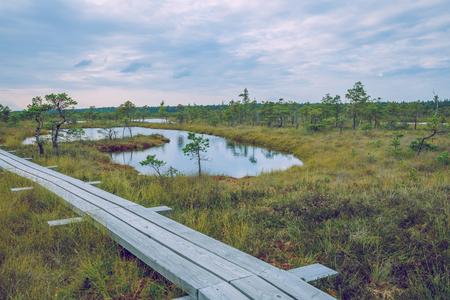 frozen lake: National swamp park in Latvia, Kemeri. 2015 Stock Photo