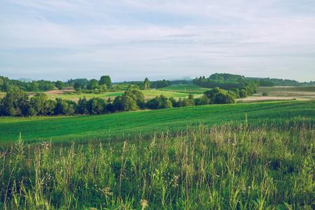 Meadow in summer tieme. 2016 Stock Photo