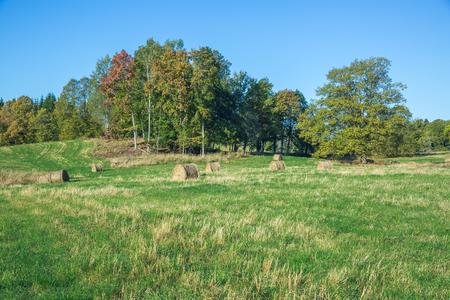 Meadow with hay rolls, Latvia, Araisi. Autumn 2015. Foto de archivo