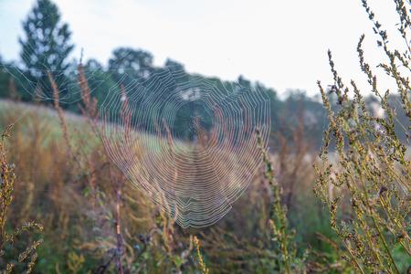 City Kraslava, Latvia. Spider net at early morning, sunlight. Travel photo 2018.