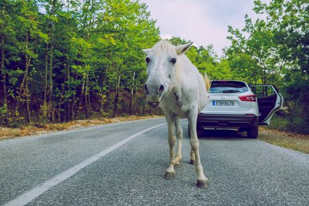 City Meteora, Greek Republic. White horse on the way in hill and car.12. Sep. 2019
