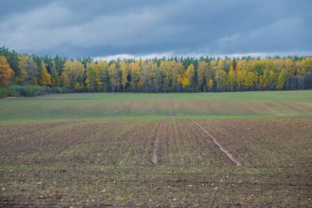 City Valmiera, Latvia Republic. Meadow in autumn, trees. Travel photo 12. okt. Banco de Imagens