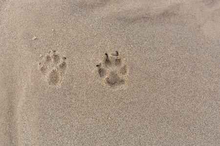 City Carnikava, Latvia. In the sand dog footprints. Travel photo.07.03.2020 Stock Photo