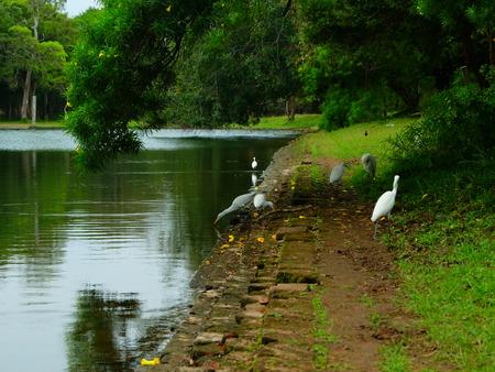 white bird: white bird beside lake Stock Photo